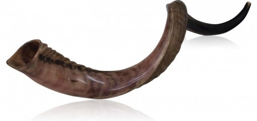 38819_large_half_polished_half_natural_kudu_horn_shofar_view_1-720x340