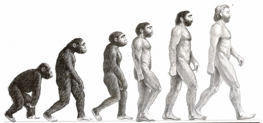 EVOLUTION-PIC